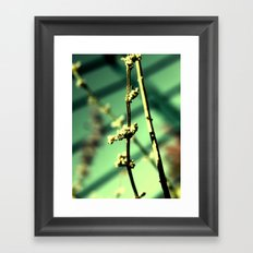 Plant over the bay Framed Art Print