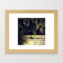 Yellow Wood in Shade Framed Art Print