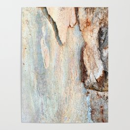 Eucalyptus tree bark and wood Poster