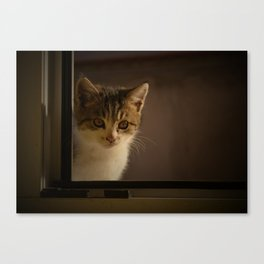 Gast on the window Canvas Print