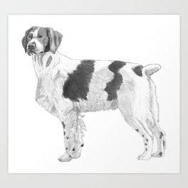 Brittany dog Art Print