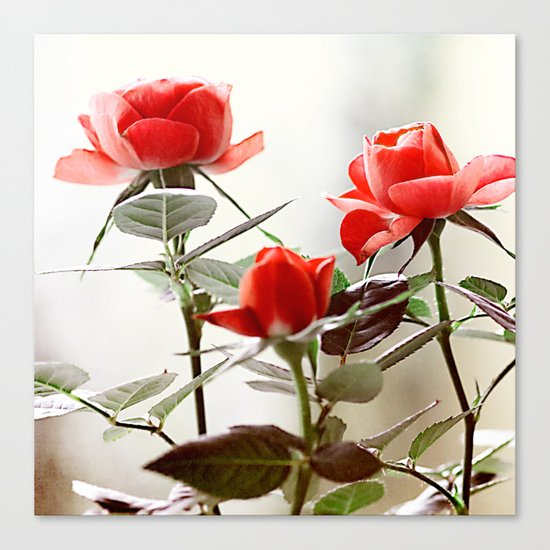 Romantic roses(8). Canvas Print