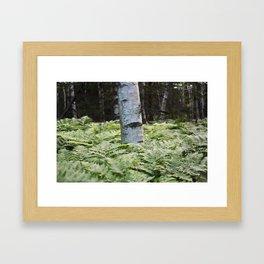 Ferns in Acadia Framed Art Print