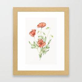 Fragile Beauty - Watercolor Poppies Framed Art Print