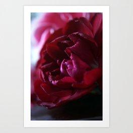 Crimson Red Carnation Art Print