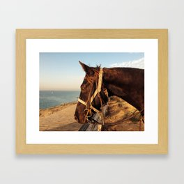profile of a horse Framed Art Print