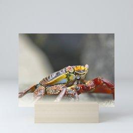Rock Crab - Grapsus grapsus Mini Art Print