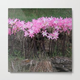 Naked Ladies in October Metal Print