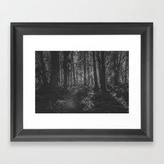 Forest Sunset on Trees Hoh Rainforest - Travel Sunset Forest Nature Tree sun black and white magic 4 Framed Art Print