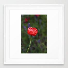 Crinkled Poppy Framed Art Print