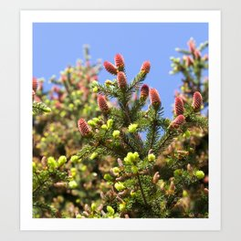springtime close up Art Print