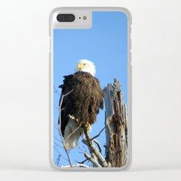 Bald Eagle - Closeup in Tree Clear iPhone Case