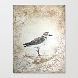 Plover Canvas Print