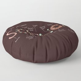 Science Rules Annotated Floor Pillow