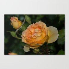Eureka Rose and Raindrops Canvas Print