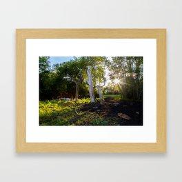 Farm Trees Framed Art Print