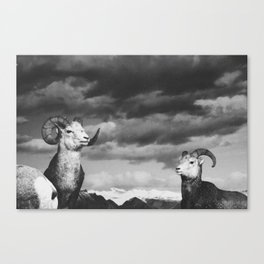 rams   fig. 01   odd ram out Canvas Print