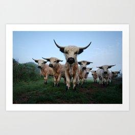 High Park Cattle Art Print