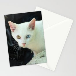 Blue And Green Eyed Cat Stationery Cards