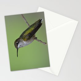 Ruby Throated Humming Bird At Rest Stationery Cards