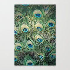 Loads of feathers Canvas Print