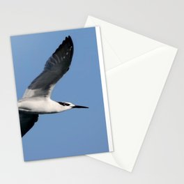 Sandwich Tern In Flight Vector Stationery Cards