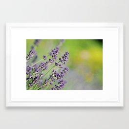 Lavenderous Framed Art Print