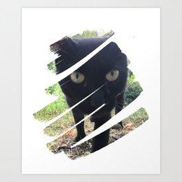 Curious Black Cat Art Print