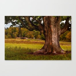 Roots - Minute Man National Park, MA Canvas Print