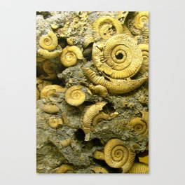 Fossils - Ammonite - Coiled Cephalopods  Canvas Print