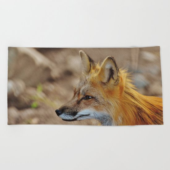 Inquisitive Mr. Fox Beach Towel