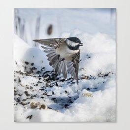 Christmas Chickadee Canvas Print