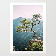 Sokolica Mountain Pine Tree Art Print