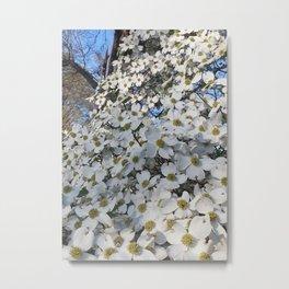 Blanket of Dogwood blooms Metal Print