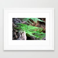 fern Framed Art Prints featuring fern by  Agostino Lo Coco