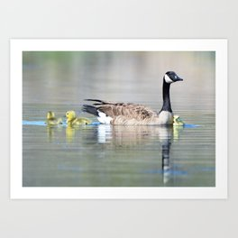 Canadian Goose with Goslings Art Print