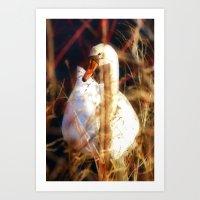 Swan Stare Art Print