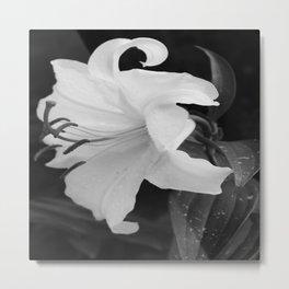 WHITE DHALIA Metal Print