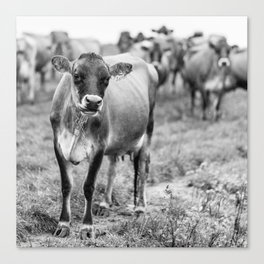 Dairy Cow Stowe Vermont Black and White Square Canvas Print