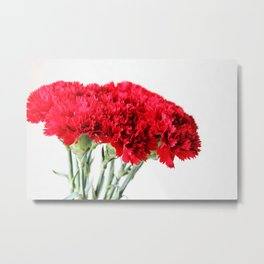 Red Carnation Photography Metal Print