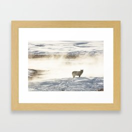 Yellowstone National Park - Wolf and Hot Spring Framed Art Print
