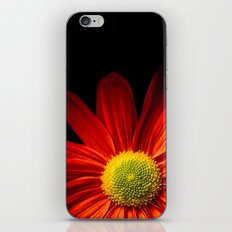 Chrysantheme iPhone & iPod Skin
