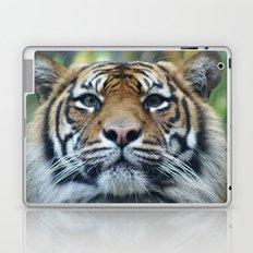Tigers Glorious Stare Laptop & iPad Skin