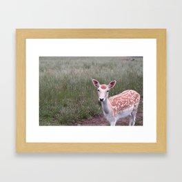 Sika Deer Framed Art Print