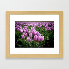 Skagit Valley Tulip Fields Framed Art Print