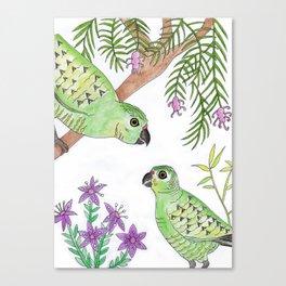 Australian Western Ground Parrots Canvas Print