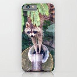 Raccoon Raiding the Bird Feeder iPhone Case