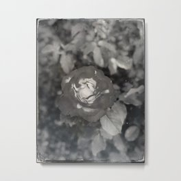 Ghostly Garden the Ethereal Rose Metal Print