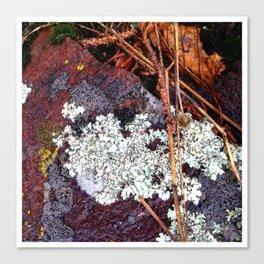 Lichen Rock and Moss Canvas Print