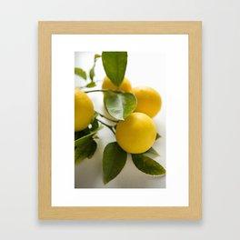 Branch of Lemons Framed Art Print